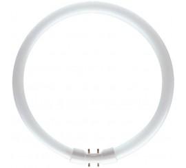 Philips Master TL5 Circular Neon 40W, 2GX13, lumina neutra